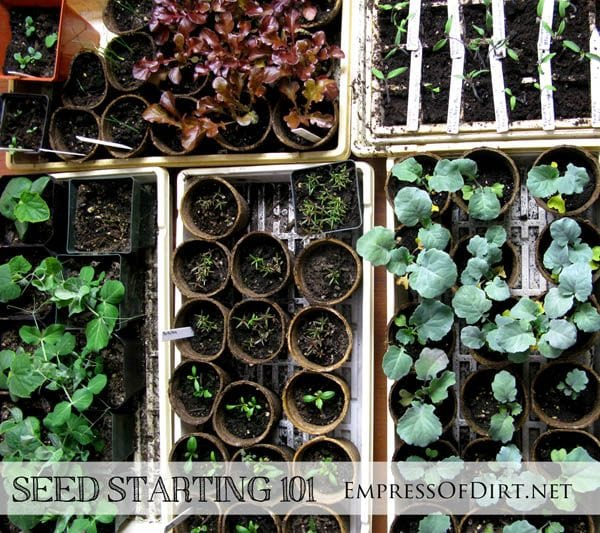 Seed Starting 101 - everything you need to know