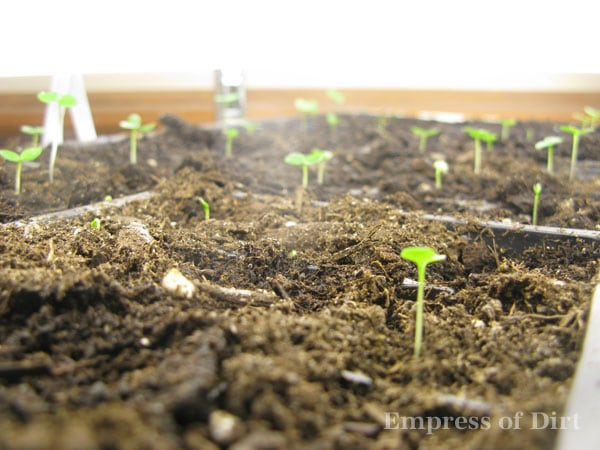 Easy tip for growing fussy seeds