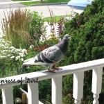 PeeBee On Porch