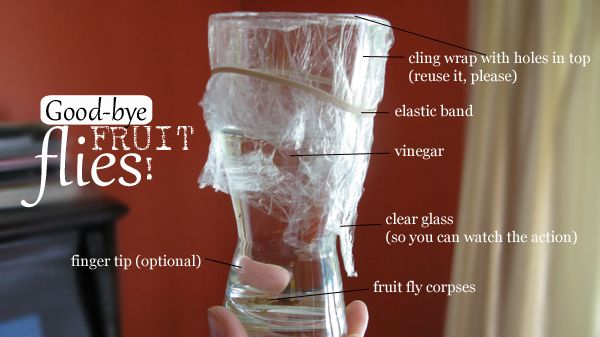 Good-bye, Fruit Flies! Easy trick for getting rid of fruit flies indoors.