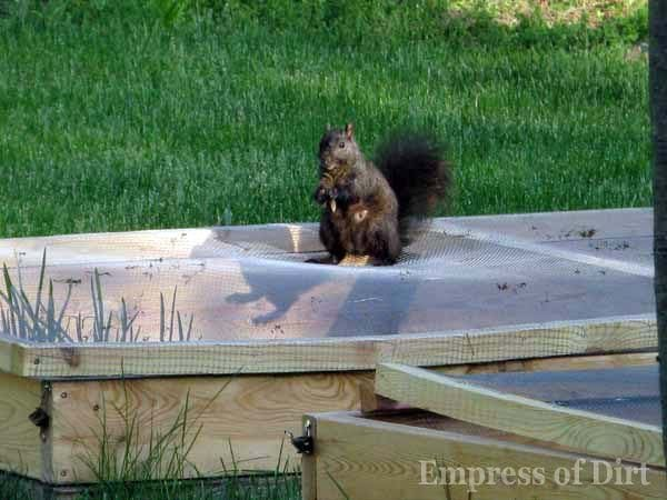 How to make squirrel screens for raised garden beds for How to protect your garden from animals