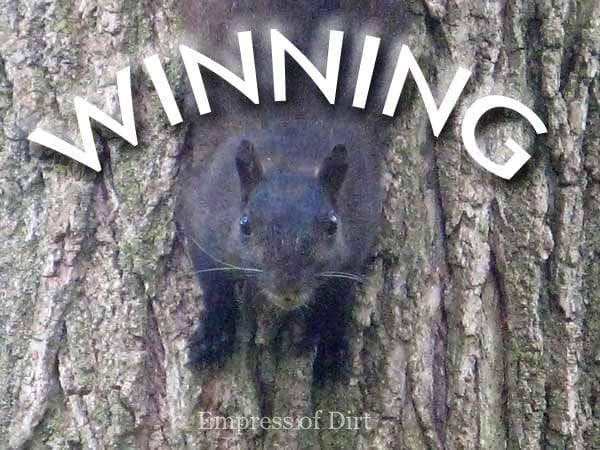 Black squirrel on tree.