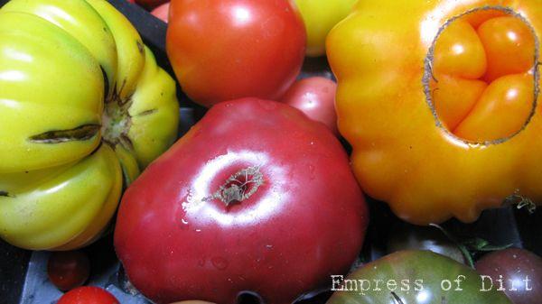 Peculiar Tomatoes