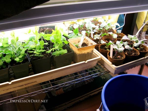 Set up grow lights for starting seeds