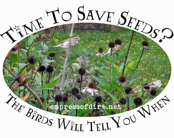 Time To Save Seeds?
