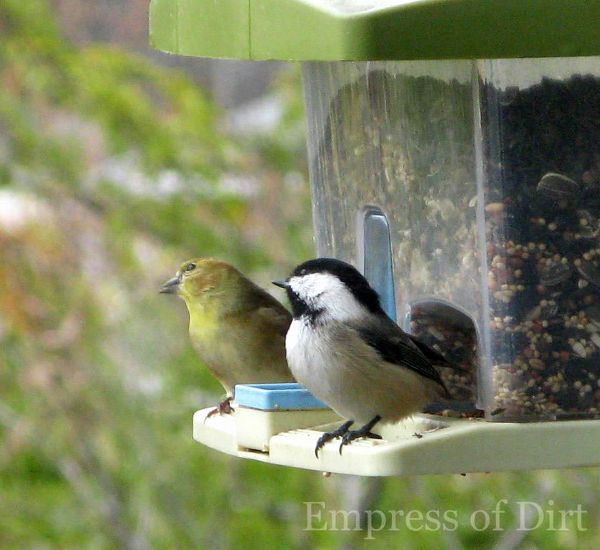 Bird Buddies On The Feeder