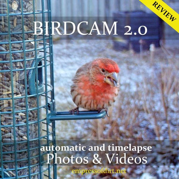 Birdcam review - great gift for gardeners