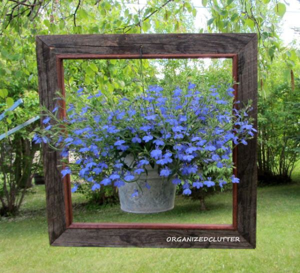 Creative and Frugal DIY Garden Art Projects: Lobelia becomes a show stopper in a hanging frame