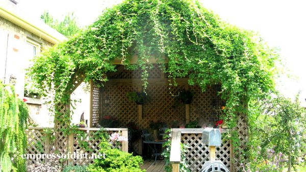 Vine Covered Gazebo