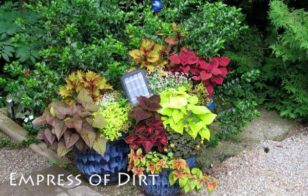 30 Garden container ideas | Coleus in blue pots