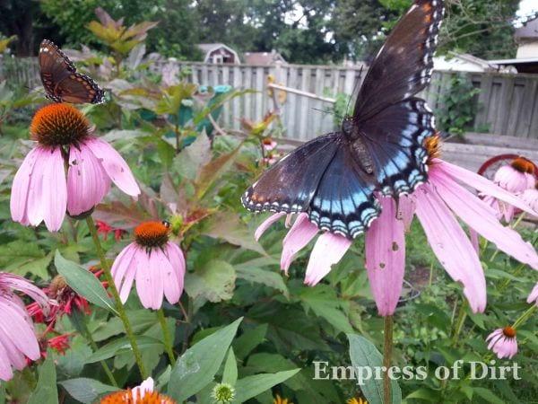 butterflies in the garden