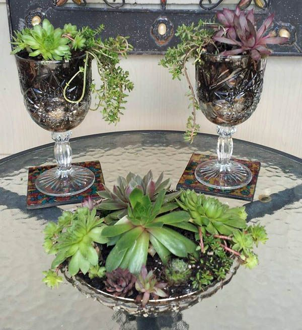 Succulents in goblets: Fabulous garden container ideas