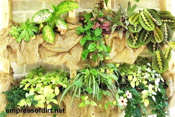 Estante para plantas de pared al aire libre de bricolaje con arpillera en https://empressofdirt.net/diyplantshelf/