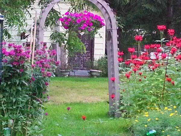 Purple and red monarda - home garden tour