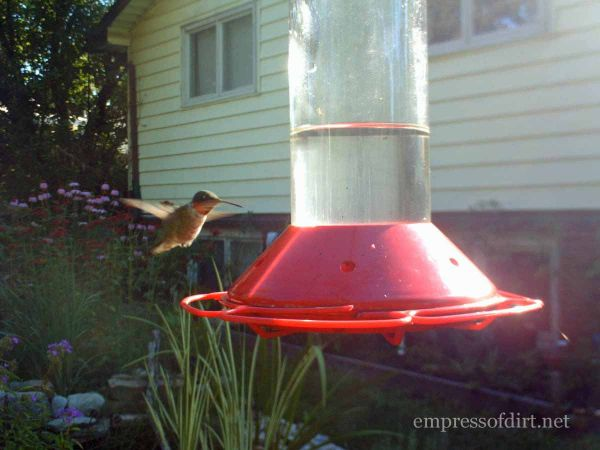 Hummingbird - Empress of Dirt Home Garden Tour