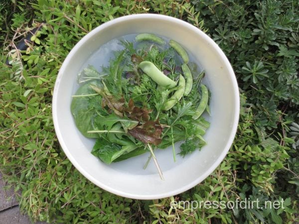 fresh mesclun salad greens - home garden tour