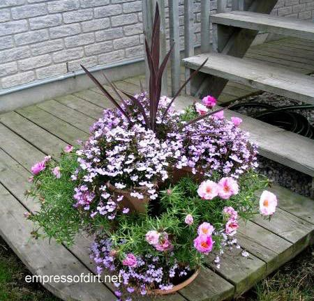 30 Garden container ideas | Pink and purple annuals