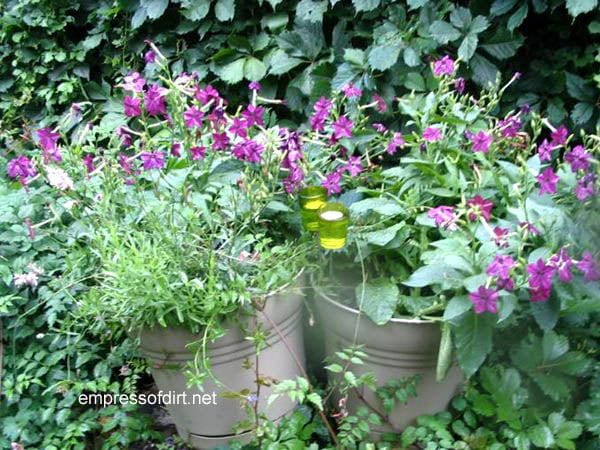 30 Garden container ideas