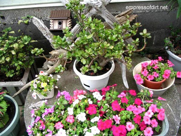 30 Garden container ideas | Tabletop display