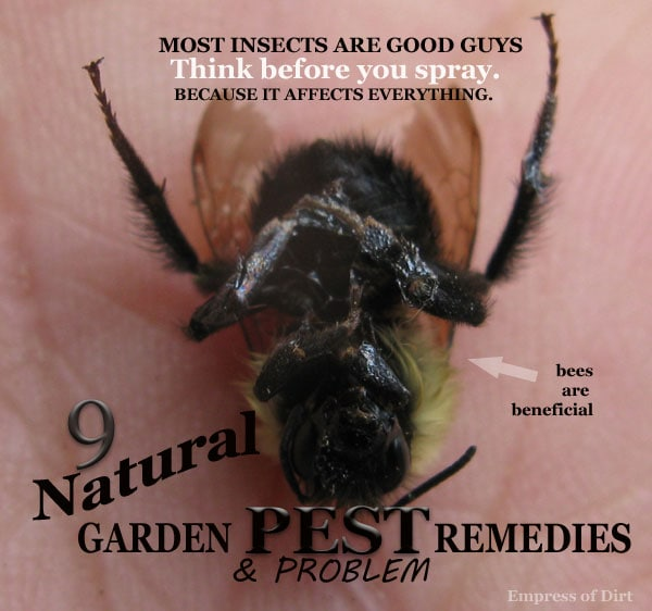 Natural pest remedies