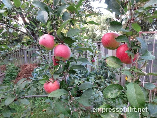 Apples to apple sauce: easy & delicious
