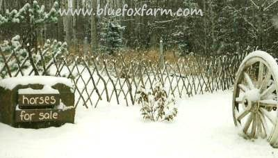 Make a lattice fence by  http://www.bluefoxfarm.com