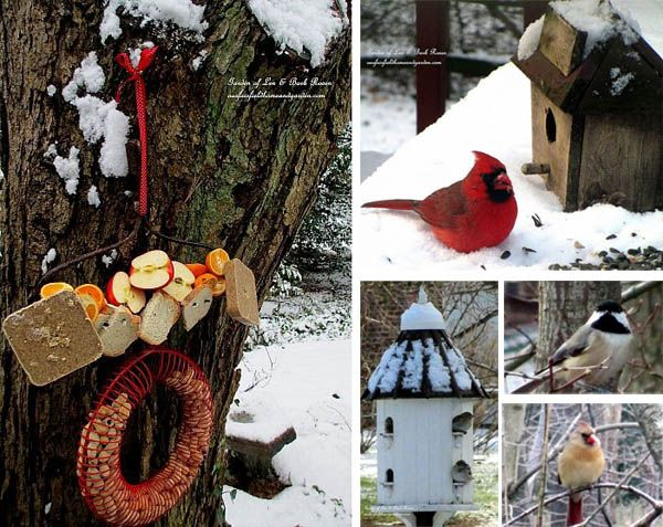 It's Time To Feed The Birds by Barb Rosen | http://ourfairfieldhomeandgarden.com/its-time-to-feed-the-birds/