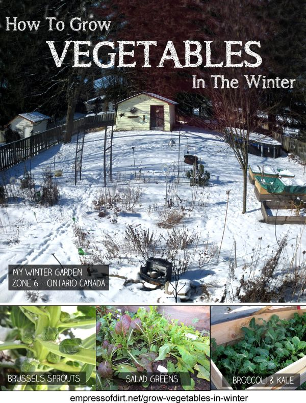 Click here to read How To Grow Vegetables In The Winter