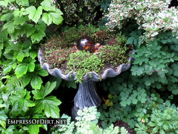 Broken Bird Bath? Plant It!