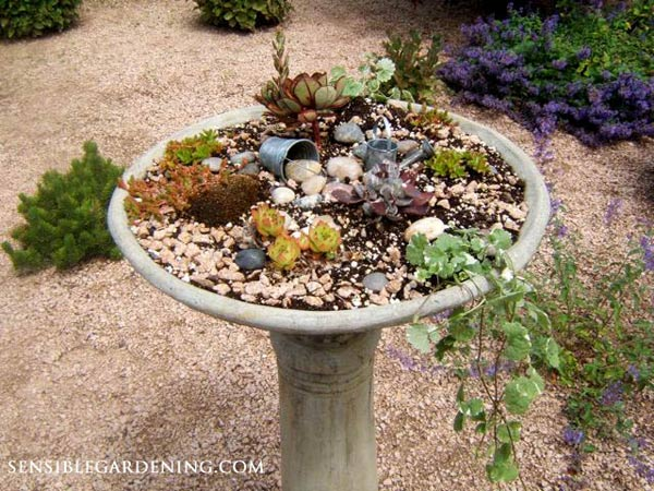 Broken bird bath? Plant it! | Planter bird bath by Lynne of http://sensiblegardening.com/expensive-junk-birdbath-turns-planter/