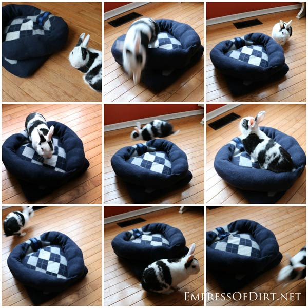make a sweater pet bed for dogs cats and bunnies