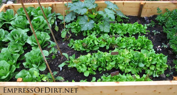 20+ Ideas For Your Home Veggie Garden - wooden raised beds