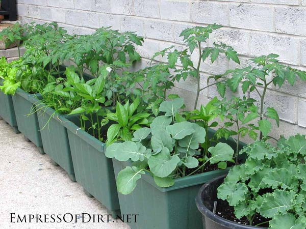 Ideas For Container Ve able Gardening Landscaping Amp Backyards For Container Ve able Gardening Ideas source