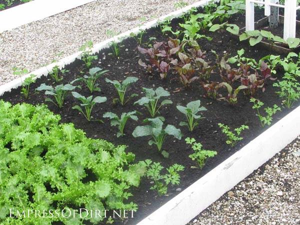 Vegetable Garden Border Ideas vegetable garden border ideas source 25 20 Ideas For Your Home Veggie Garden Tradional Kitchen Garden