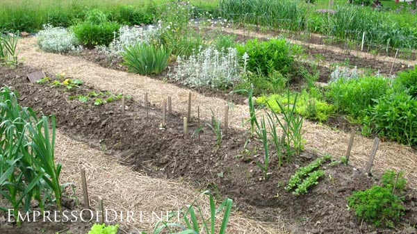 20+ Ideas for your home veggie garden - inground veggie bed with straw pathways