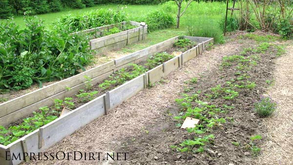 20+ Ideas for your home veggie garden - raised beds with straw pathways