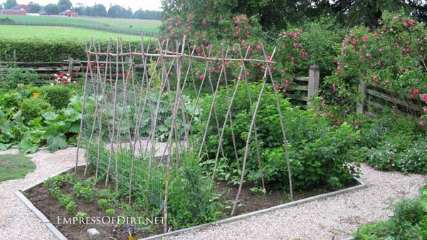 20+ Ideas for your home veggie garden - wood branches for pea supports